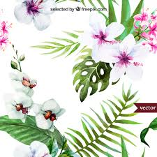 Tropical Plants Pictures - hand painted tropical plants vector free download