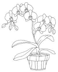 coloriage fleurs et plantes orchidees à colorier allofamille
