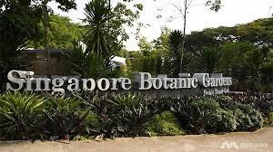 Singapore Botanic Gardens Location Walk On The Jungle Boardwalk Of Singapore Botanic Gardens