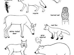 forest animals coloring page 100 images free forest animals