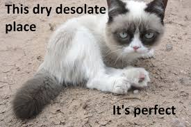 Tard The Grumpy Cat Meme - love this cat image taken from daily tard blog and therefore not