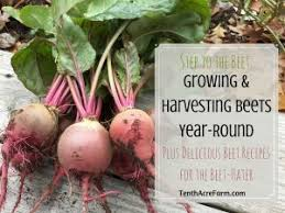 growing carrots year round a strategy for success tenth acre farm