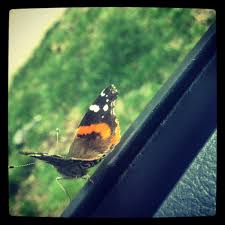 butterfly on my car window nature photography nature