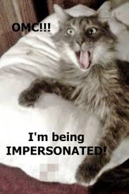 Identity Theft Meme - social media pet identity theft