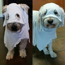 Dogs Halloween Costumes 23 Awesome Dog Halloween Costume Ideas Pictures Dogtime