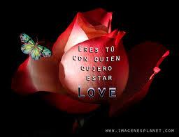 imagenes de amor con rosas animadas gif animadas con rosas y frases imágenes de amor con movimiento