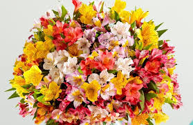 peruvian lilies peruvian care tips proflowers