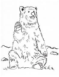 grizzly bear coloring page samantha bell