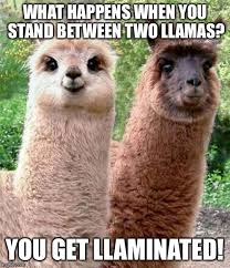 Two Picture Meme Maker - happy birthday llama meme generator imgflip