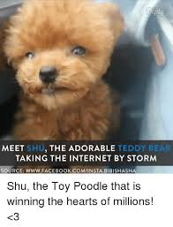 Teddy Meme - 25 best memes about adorable teddy bear adorable teddy bear memes