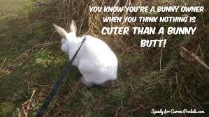 Saturday Meme - carma poodale bunny meme saturday