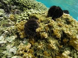 image result for sea algae theme poseidon pinterest