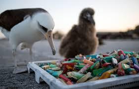 plastic island how our trash is destroying paradise cnn com