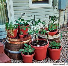 container gardening high mowing organic non gmo seeds