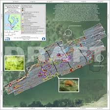 Tampa Bay Map 25 Tampa Bay Hard Bottom Monitoring Survey U2013 Guerrilla Cartography