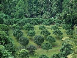 Greenliving Greenliving Overview1 Jpg