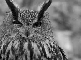 white owl 2 wallpapers grayscale owl 1920x1080