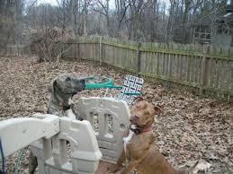 peaceful dog trash repurposed