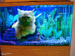cats in fish tanks off topic