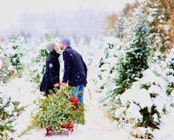choose and cut your christmas tree at suydam farms somerset new