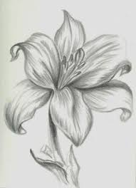pictures images of pencil drawings of flowers drawing art gallery