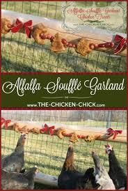 best 25 treats for chickens ideas on pinterest chicken treats