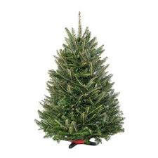 balsam tree real christmas trees delivered fresh fraser fir christmas tree