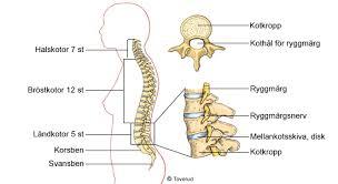 ont i pungen ont i ryggen 1177 vårdguiden sjukdomar undersökningar hitta