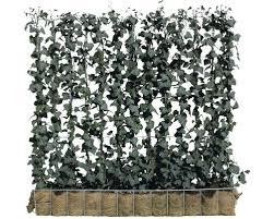 balkon sichtschutz hornbach sichtschutz hecke efeu helix 120 x h 100 cm bei hornbach kaufen