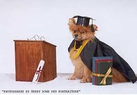dog graduation cap dog graduation cap gown