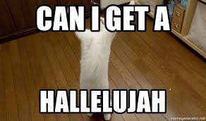 Praise The Lord Meme - can i get a hallelujah praise the lord cat meme generator