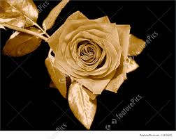 golden roses picture of golden