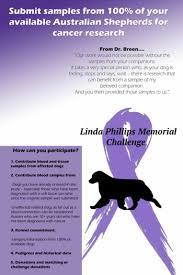 life with australian shepherd linda phillips memorial cancer challenge australian shepherd