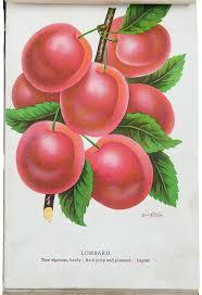 the nurseryman s specimen book of american fruits flowers