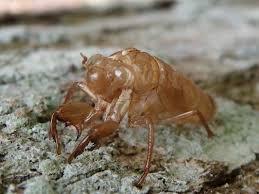 insect exoskeletons craft u0027n u0027 home