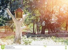 house lens bird house from wood on tree with lens flare light stock photo