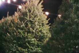 ng3 christmas tree lot u2013 grace snellville grace family of churches