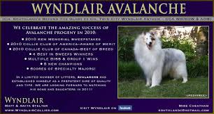 resume template customer service australian kelpie breeders north who s your double merle daddy