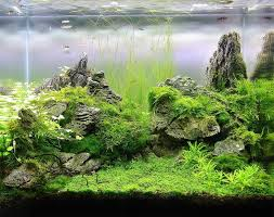Planted Aquarium Aquascaping 502 Best Aquascapes Images On Pinterest Aquarium Ideas Planted