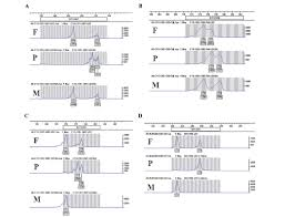 bureau de la pcr a duplication upstream of sox9 was not positively correlated with