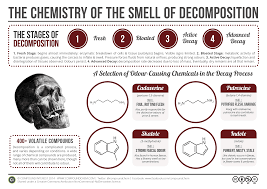 chemistry of decomposition writing fodder pinterest