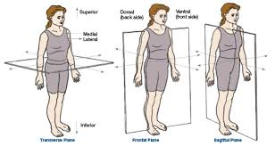 Human Anatomy Planes Of The Body Explaining The Planes Of Motion