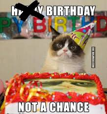 19 Best Grumpy Cat My - you must be celebrate you cat s birthday 19 photos bajiroo com