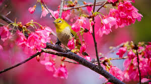 blossoms tag wallpapers tree bird blossoms flowers watercolor