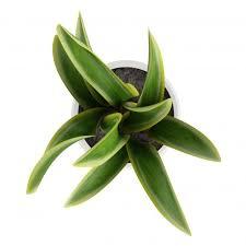 plante d駱olluante bureau chambre plante dépolluante plante dépolluante bureau plante