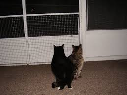 Keep Cats In Backyard Keeping Cats From Scratching Screen Doors Thriftyfun