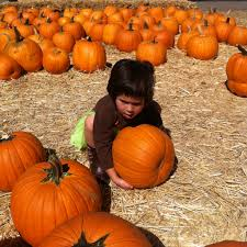 Pumpkin Patch Moorpark by The World U0027s Best Photos Of Halloween And Ventura Flickr Hive Mind