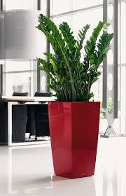 plantes bureau alpha plantes de bureau quelle plante opter pour bureau