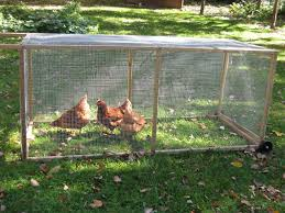 practical chicken run probably need a bigger one for our group