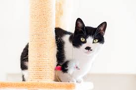 Cat Scratch Lounge How To Stop Your Cat From Scratching The Furniture The Cat Site